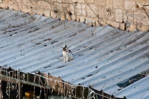 Cat_on_a_Hot_Tin_Roof,_Jerusalem